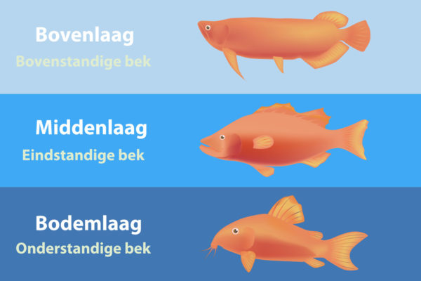Waterlagen in de natuur versus aquarium