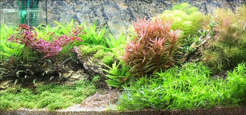 Nederlandse plantenaquarium