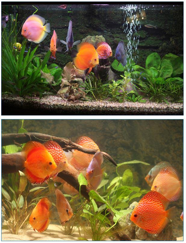 Filterzand en aquariumgrind
